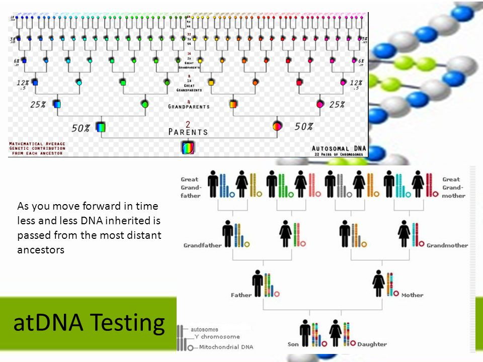 atDNA Testing As you move forward in time less and less DNA inherited is passed from the most distant ancestors