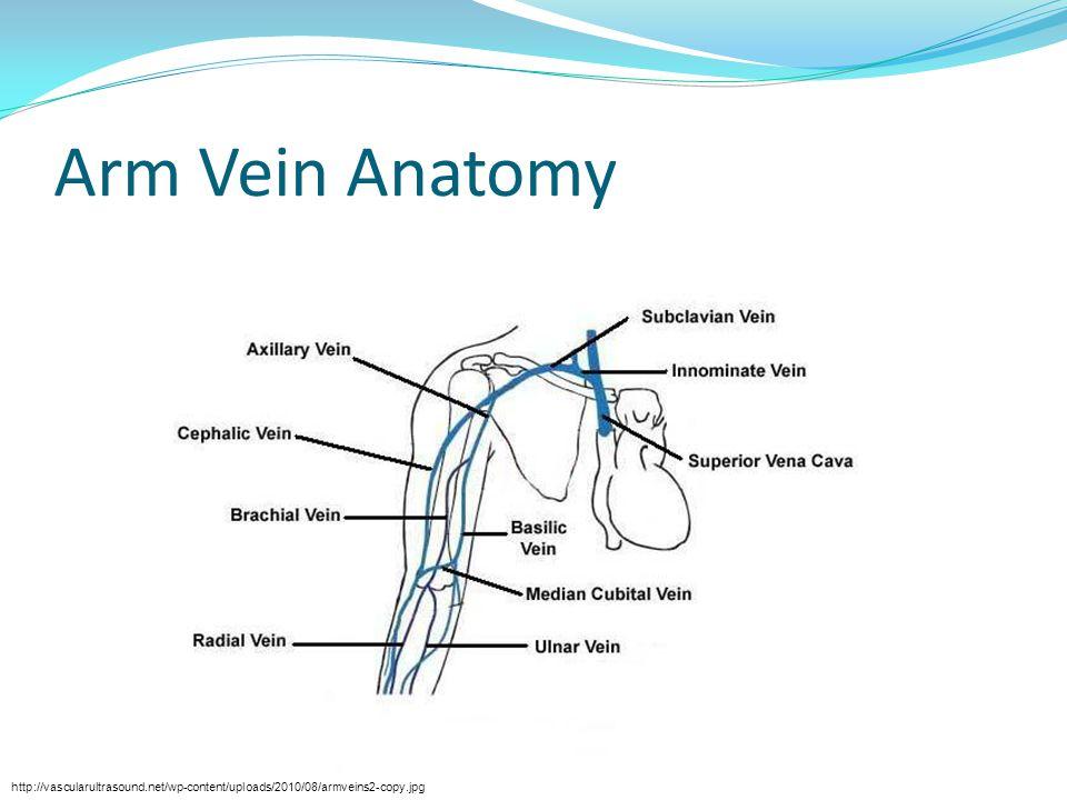 Arm Vein Anatomy http://vascularultrasound.net/wp-content/uploads/2010/08/armveins2-copy.jpg