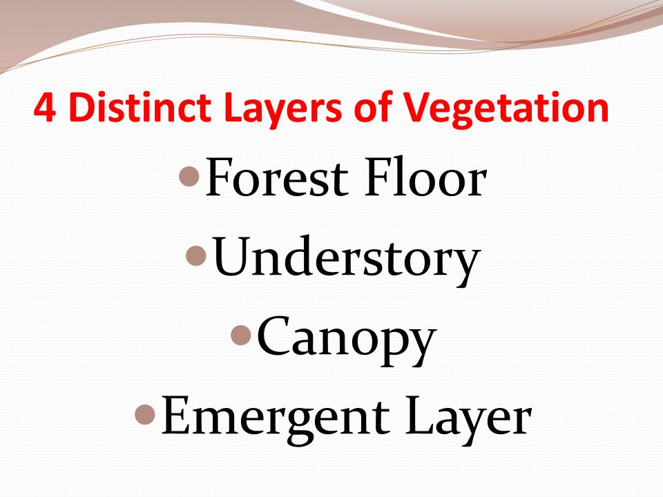 4 Distinct Layers of Vegetation Forest Floor Understory Canopy Emergent Layer