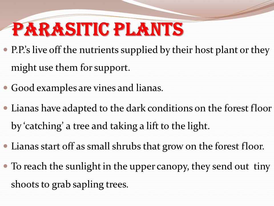 Parasitic Plants P.P.'s live off the nutrients supplied by their host plant or they might use them for support. Good examples are vines and lianas. Li