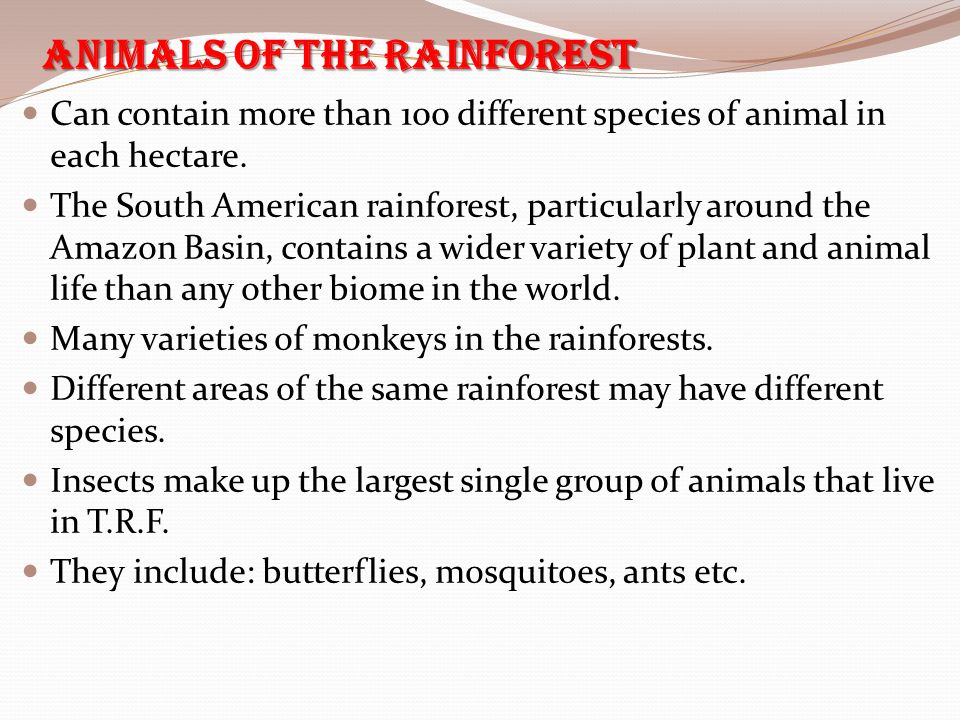 Animals of the Rainforest Can contain more than 100 different species of animal in each hectare. The South American rainforest, particularly around th