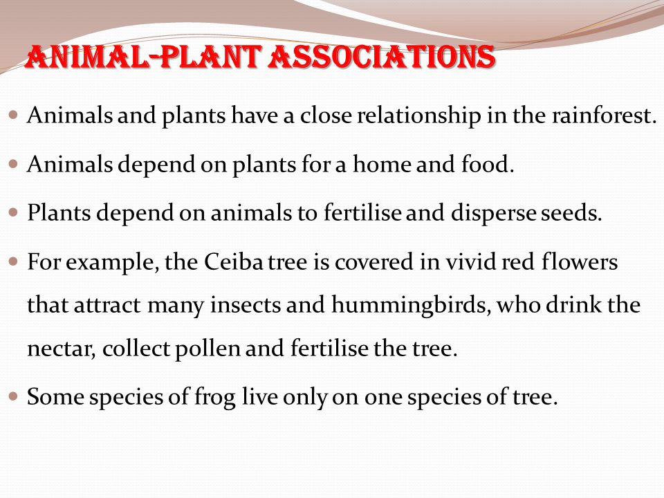 Animal-Plant Associations Animals and plants have a close relationship in the rainforest. Animals depend on plants for a home and food. Plants depend