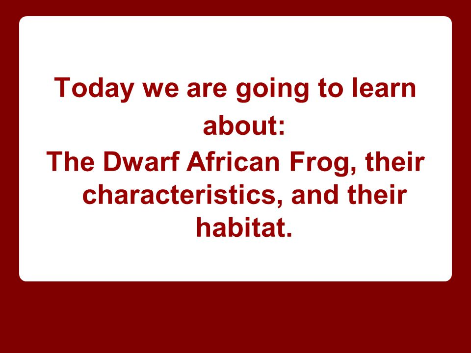 Today we are going to learn about: The Dwarf African Frog, their characteristics, and their habitat.