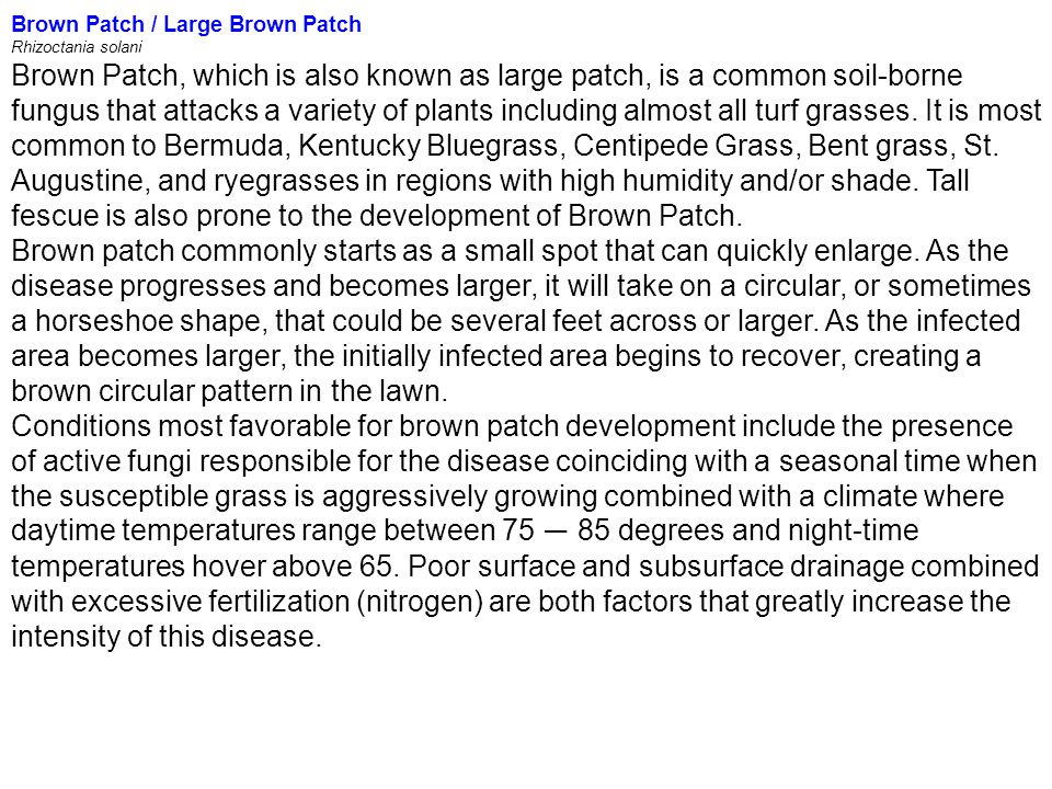 Brown Patch / Large Brown Patch Rhizoctania solani Brown Patch, which is also known as large patch, is a common soil-borne fungus that attacks a varie