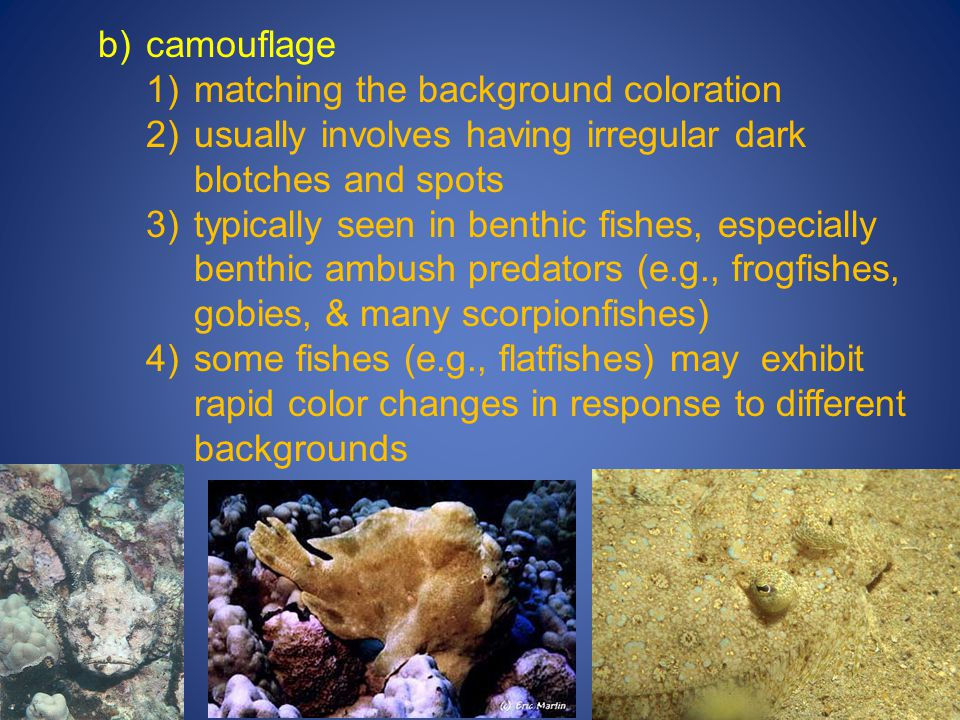b)camouflage 1)matching the background coloration 2)usually involves having irregular dark blotches and spots 3)typically seen in benthic fishes, espe