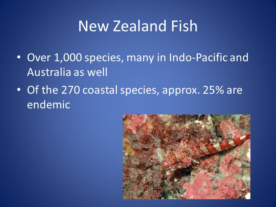 New Zealand Fish Over 1,000 species, many in Indo-Pacific and Australia as well Of the 270 coastal species, approx. 25% are endemic