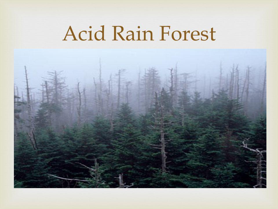  Acid Rain Forest