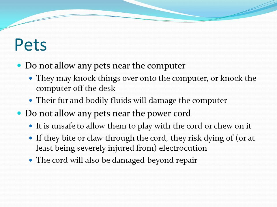 Pets Do not allow any pets near the computer They may knock things over onto the computer, or knock the computer off the desk Their fur and bodily fluids will damage the computer Do not allow any pets near the power cord It is unsafe to allow them to play with the cord or chew on it If they bite or claw through the cord, they risk dying of (or at least being severely injured from) electrocution The cord will also be damaged beyond repair