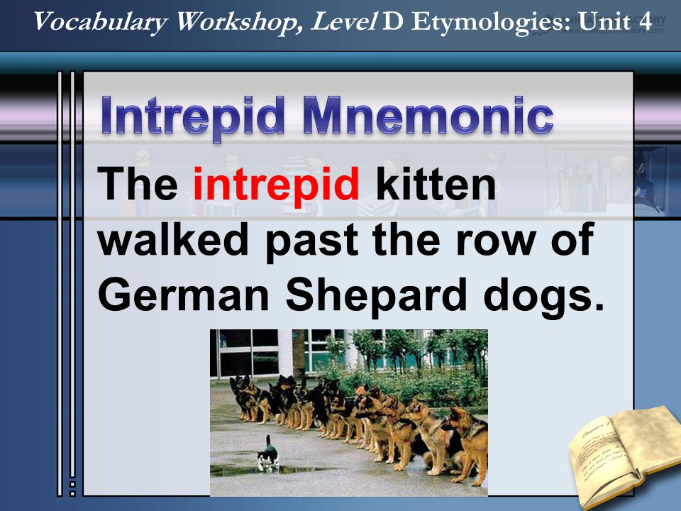 The intrepid kitten walked past the row of German Shepard dogs.