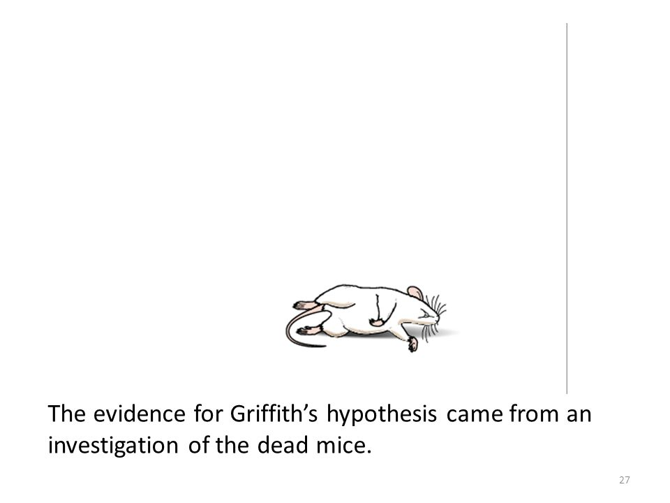 The evidence for Griffith's hypothesis came from an investigation of the dead mice. 27