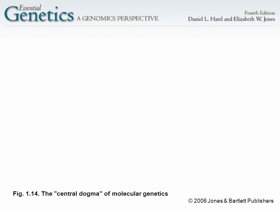 © 2006 Jones & Bartlett Publishers Fig. 1.14. The central dogma of molecular genetics
