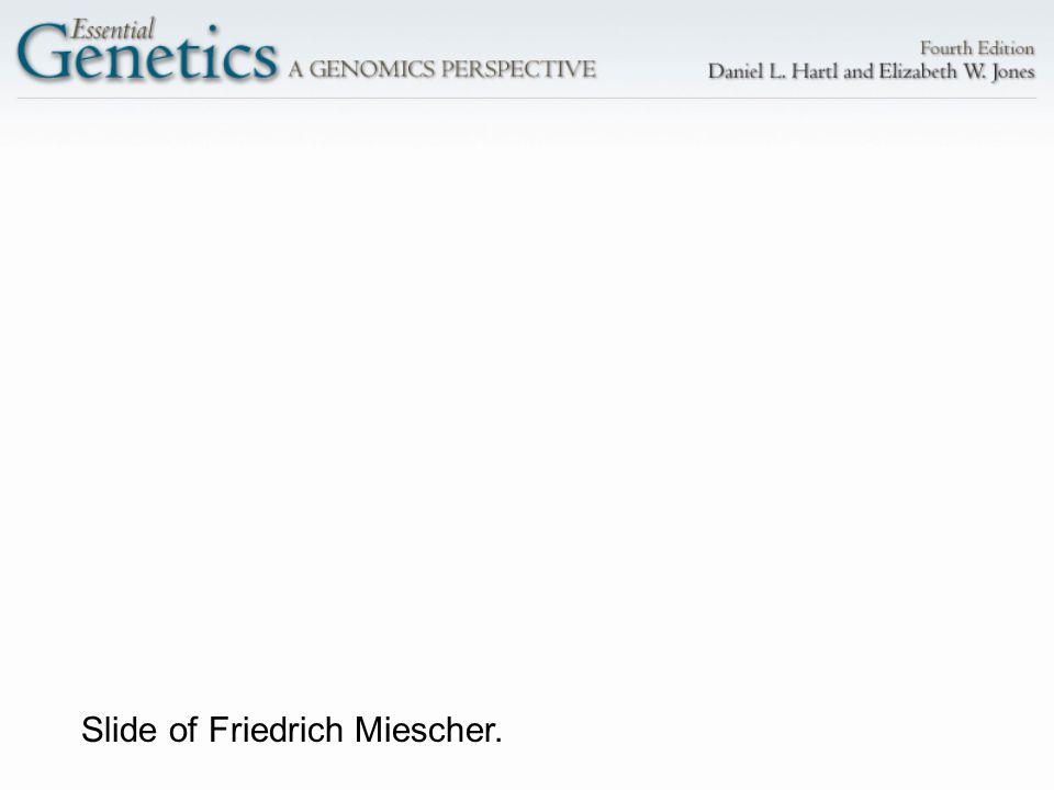 Slide of Friedrich Miescher.
