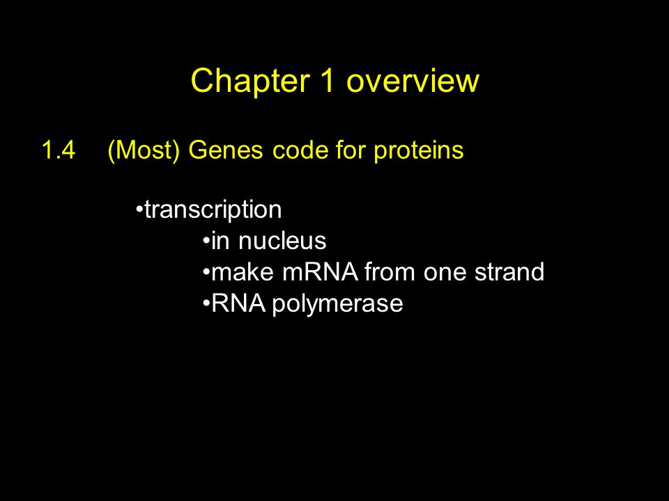 Chapter 1 overview 1.4(Most) Genes code for proteins transcription in nucleus make mRNA from one strand RNA polymerase