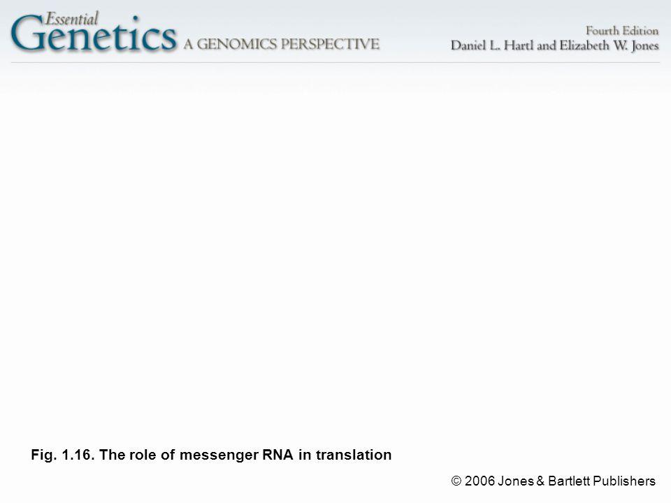 © 2006 Jones & Bartlett Publishers Fig. 1.16. The role of messenger RNA in translation