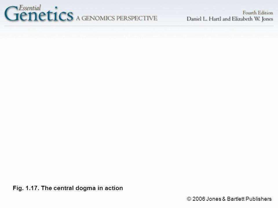 © 2006 Jones & Bartlett Publishers Fig. 1.17. The central dogma in action