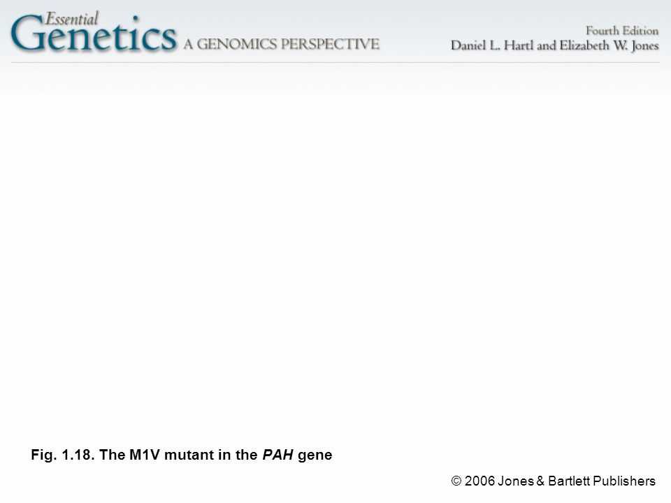 © 2006 Jones & Bartlett Publishers Fig. 1.18. The M1V mutant in the PAH gene
