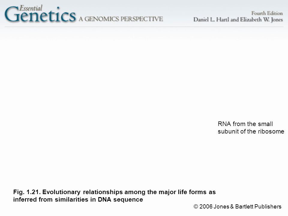 © 2006 Jones & Bartlett Publishers Fig. 1.21. Evolutionary relationships among the major life forms as inferred from similarities in DNA sequence RNA