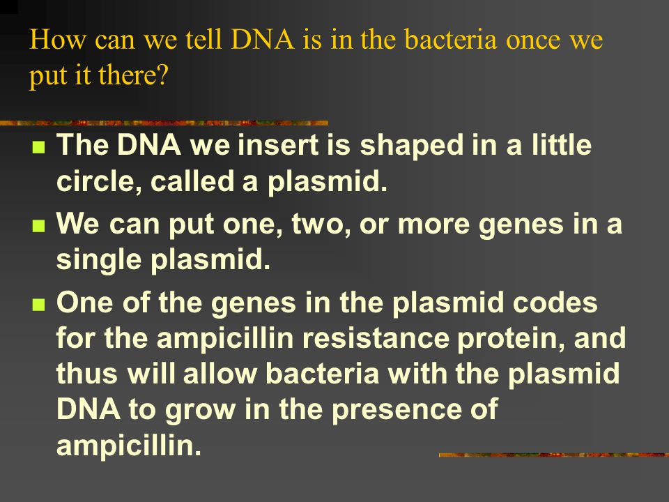 What is a plasmid.What is ampicillin. A plasmid is a small circle of DNA.