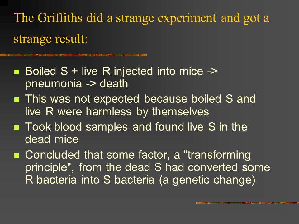 Summary of Griffith s experiments InjectedResultLive S in Blood.