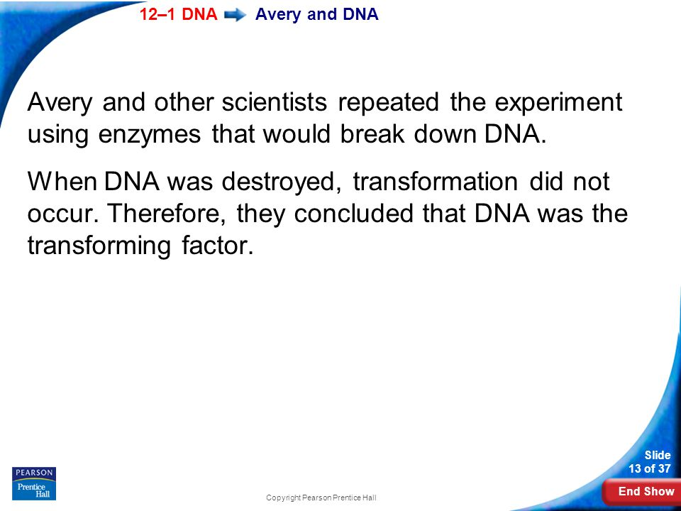 End Show 12–1 DNA Slide 13 of 37 Copyright Pearson Prentice Hall Avery and DNA Avery and other scientists repeated the experiment using enzymes that would break down DNA.