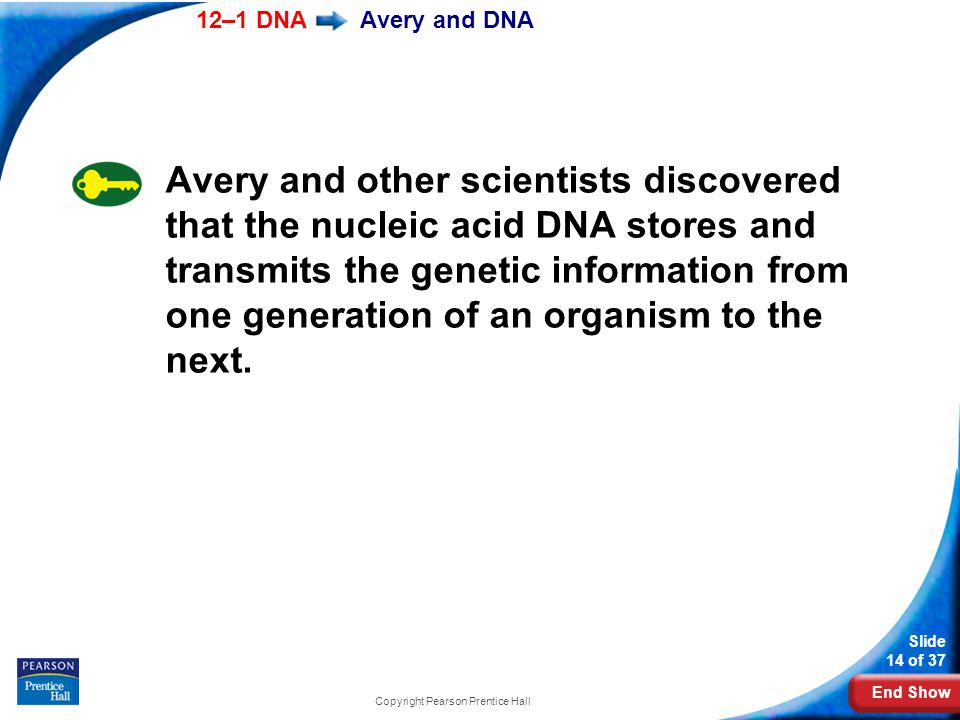 End Show 12–1 DNA Slide 14 of 37 Copyright Pearson Prentice Hall Avery and DNA Avery and other scientists discovered that the nucleic acid DNA stores