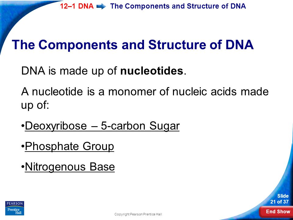 End Show 12–1 DNA Slide 21 of 37 Copyright Pearson Prentice Hall The Components and Structure of DNA DNA is made up of nucleotides. A nucleotide is a