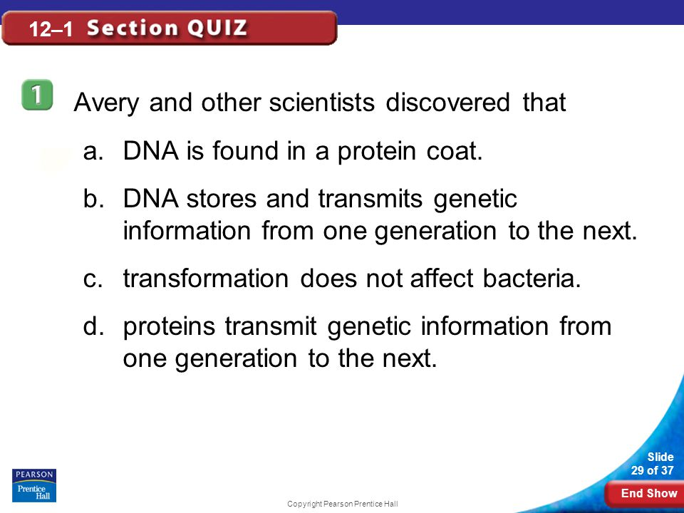 End Show Slide 29 of 37 Copyright Pearson Prentice Hall 12–1 Avery and other scientists discovered that a.DNA is found in a protein coat. b.DNA stores