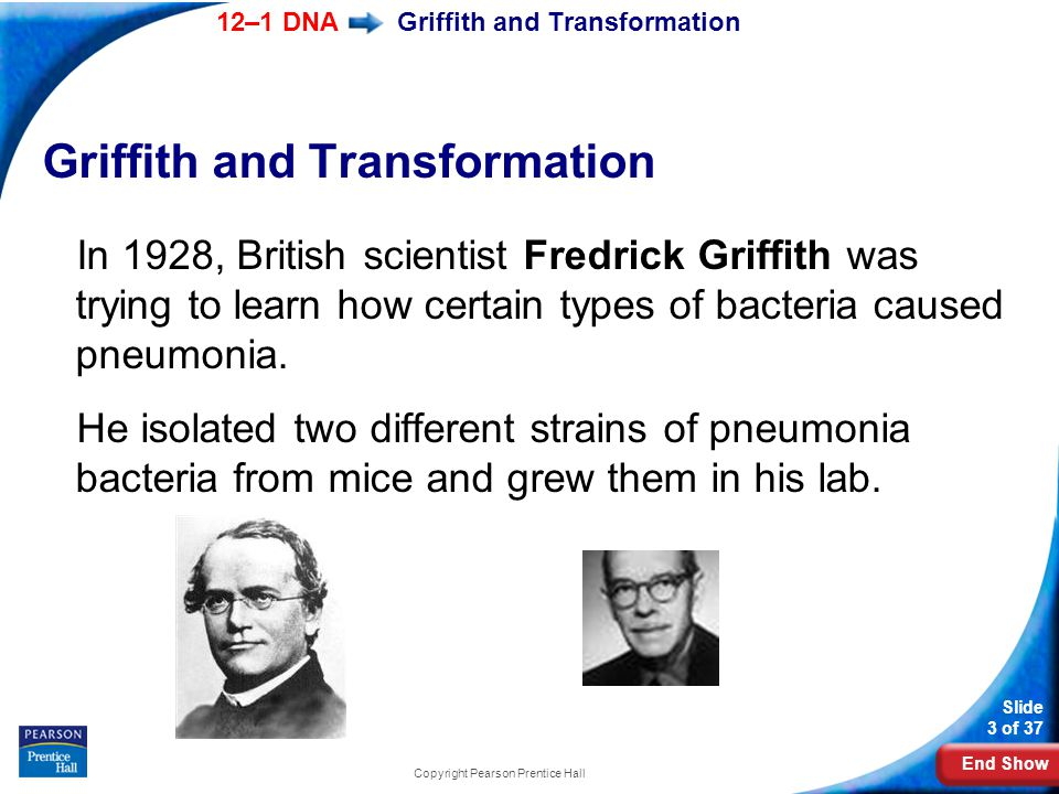 End Show 12–1 DNA Slide 3 of 37 Copyright Pearson Prentice Hall Griffith and Transformation In 1928, British scientist Fredrick Griffith was trying to learn how certain types of bacteria caused pneumonia.