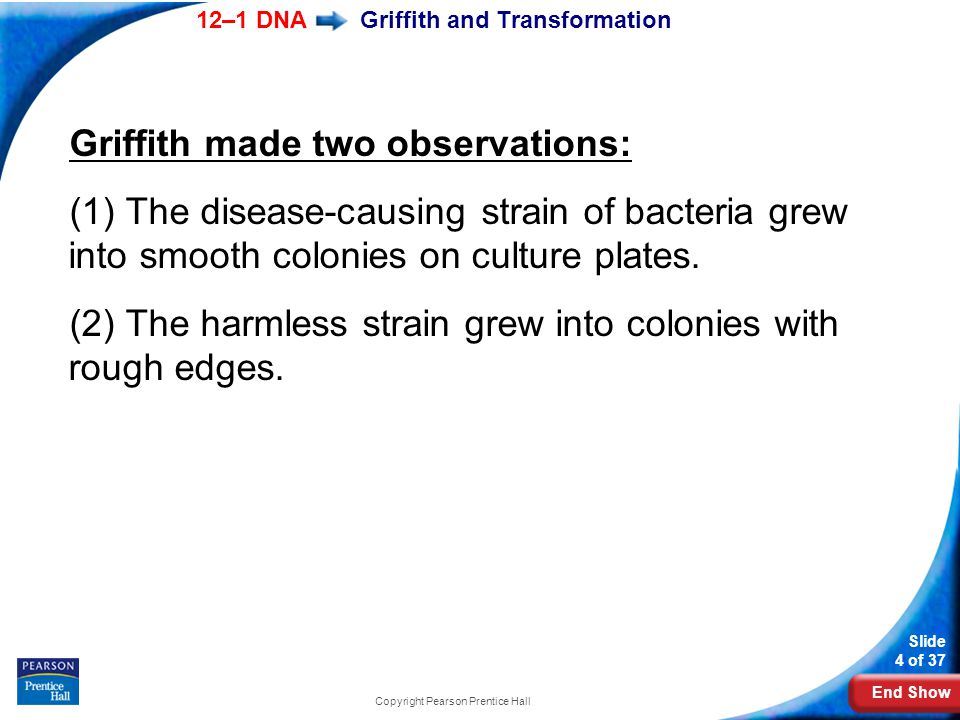 End Show 12–1 DNA Slide 4 of 37 Copyright Pearson Prentice Hall Griffith and Transformation Griffith made two observations: (1) The disease-causing st