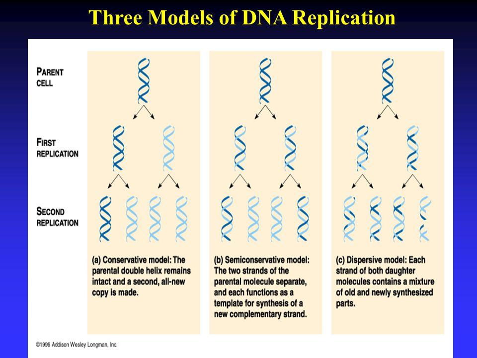 Three Models of DNA Replication