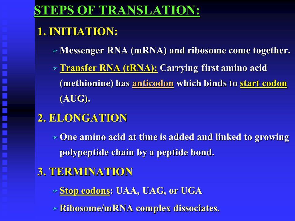 STEPS OF TRANSLATION: 1. INITIATION: F Messenger RNA (mRNA) and ribosome come together. F Transfer RNA (tRNA): Carrying first amino acid (methionine)