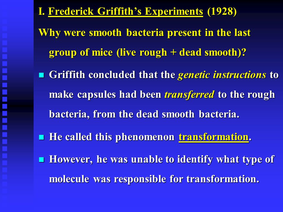 I. Frederick Griffith's Experiments (1928) Why were smooth bacteria present in the last group of mice (live rough + dead smooth)? n Griffith concluded