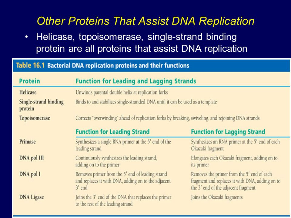Other Proteins That Assist DNA Replication Helicase, topoisomerase, single-strand binding protein are all proteins that assist DNA replication