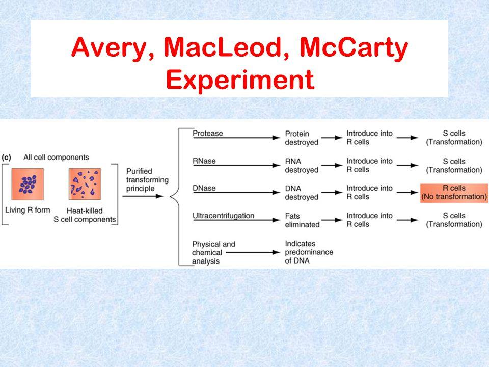 Avery, MacLeod, McCarty Experiment