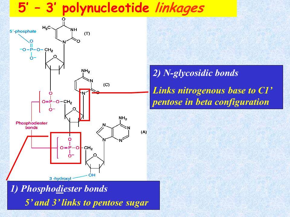 Nucleotide monomer nucleotide = phosphate ester monomer of pentose dinucleotide - Dimer Oligonucleotide – short polymer (<10) Polynucleotide – long po