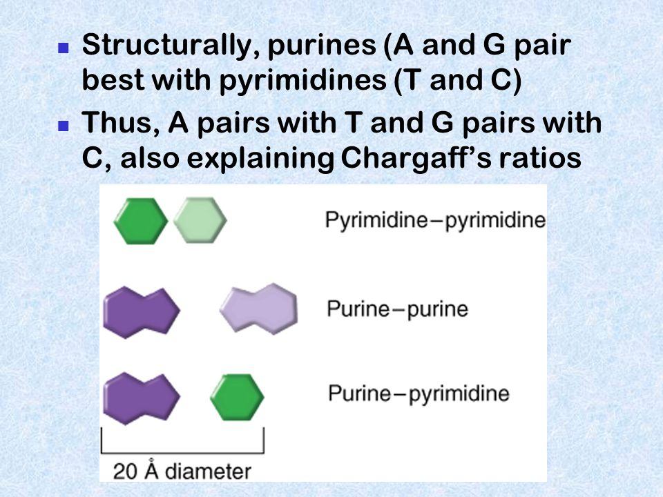 Essential features of B-DNA Right twisting Double stranded helix Anti-parallel Bases on the inside (Perpendicular to axis) Uniform diameter (~20A) Maj