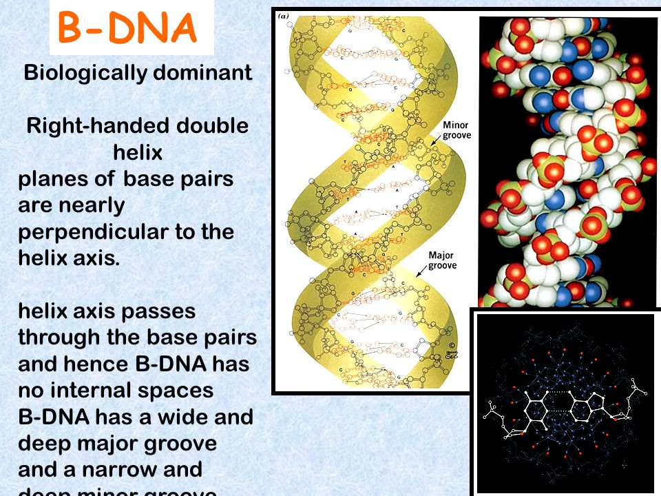Maybe because RNA but not DNA is prone to base-catalysed hydrolysis Why DNA evolved as the genetic material but not RNA?