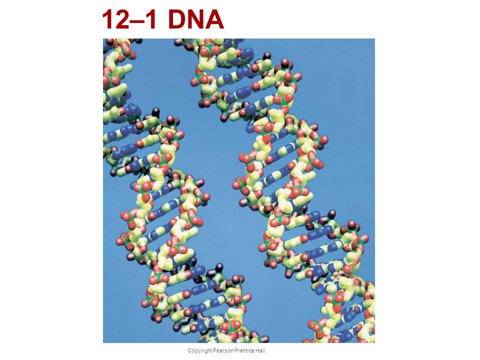 Copyright Pearson Prentice Hall 12–1 DNA
