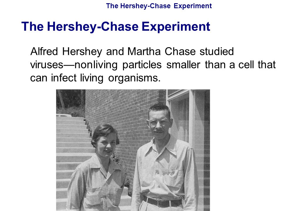 Copyright Pearson Prentice Hall The Hershey-Chase Experiment Alfred Hershey and Martha Chase studied viruses—nonliving particles smaller than a cell t