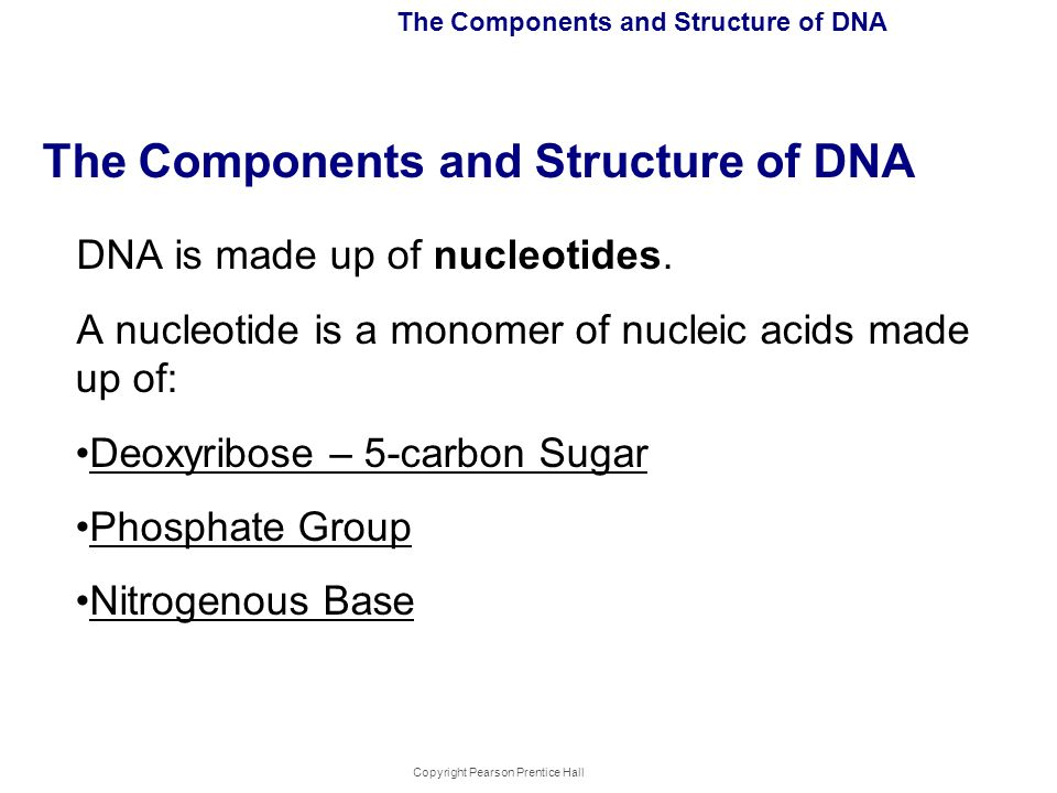 Copyright Pearson Prentice Hall The Components and Structure of DNA DNA is made up of nucleotides. A nucleotide is a monomer of nucleic acids made up