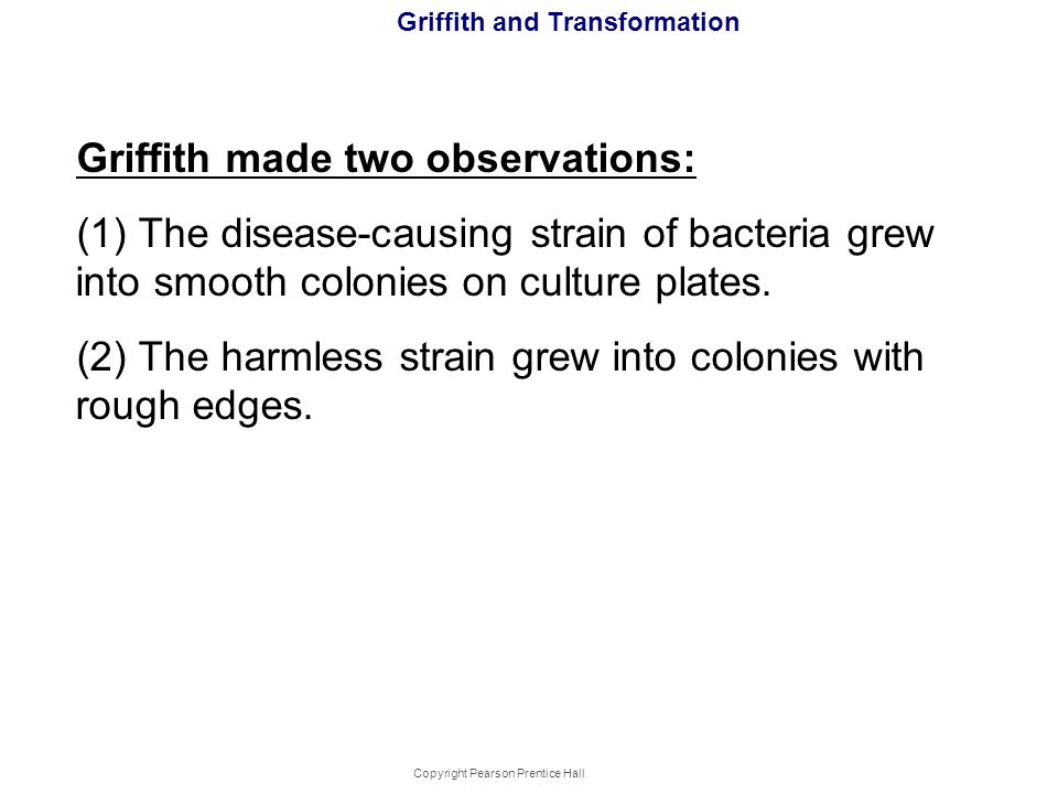 Copyright Pearson Prentice Hall Griffith and Transformation Griffith made two observations: (1) The disease-causing strain of bacteria grew into smoot