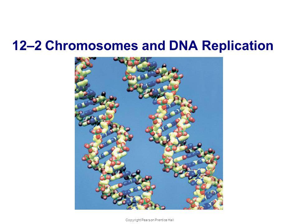 Copyright Pearson Prentice Hall 12-2 Chromosomes and DNA Replication 12–2 Chromosomes and DNA Replication