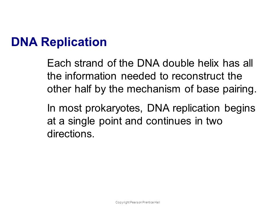 Copyright Pearson Prentice Hall DNA Replica tion Each strand of the DNA double helix has all the information needed to reconstruct the other half by t