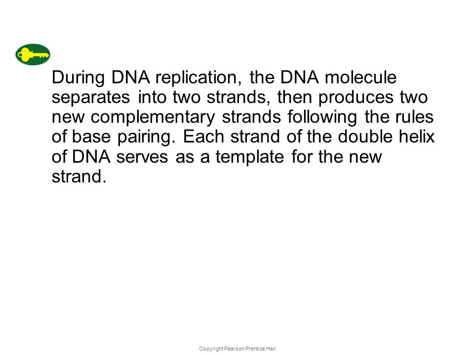 Copyright Pearson Prentice Hall DNA Replica tion During DNA replication, the DNA molecule separates into two strands, then produces two new complement