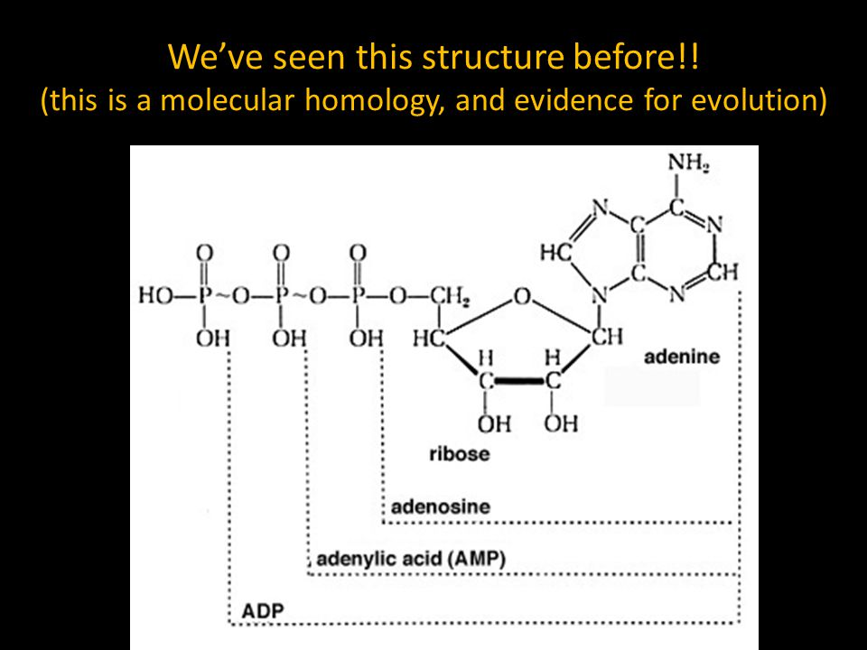 We've seen this structure before!! (this is a molecular homology, and evidence for evolution)