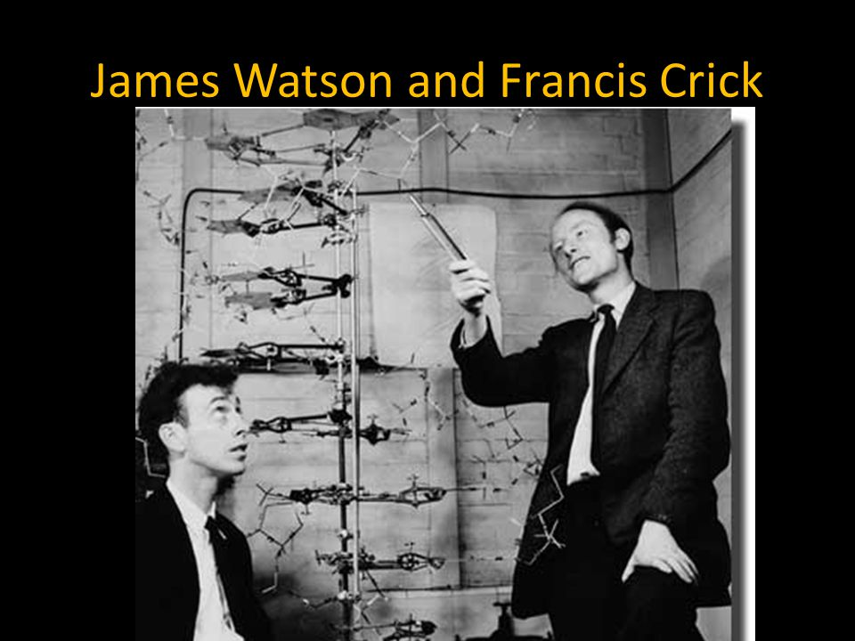 James Watson and Francis Crick Both were working at Cambridge University (London) when they saw Rosalind photograph.