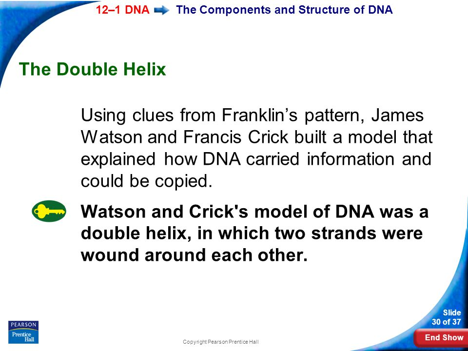 End Show 12–1 DNA Slide 30 of 37 Copyright Pearson Prentice Hall The Components and Structure of DNA The Double Helix Using clues from Franklin's patt
