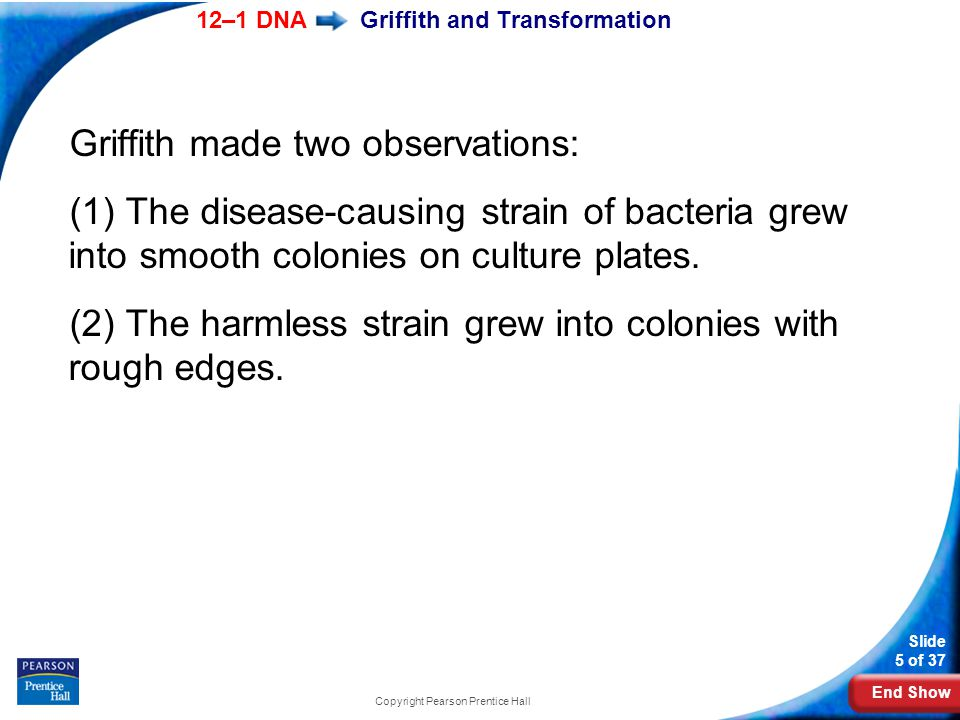 End Show 12–1 DNA Slide 5 of 37 Copyright Pearson Prentice Hall Griffith and Transformation Griffith made two observations: (1) The disease-causing st