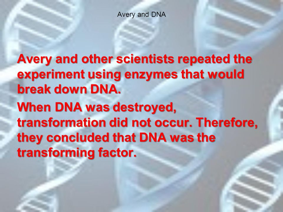 Avery and DNA Avery and other scientists repeated the experiment using enzymes that would break down DNA.