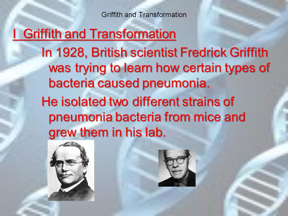 Griffith and Transformation I Griffith and Transformation In 1928, British scientist Fredrick Griffith was trying to learn how certain types of bacteria caused pneumonia.